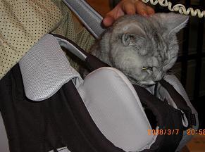 babycarry2.jpg